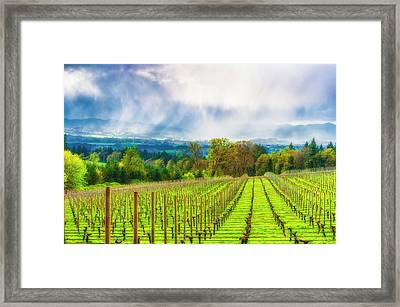 Spring Showers In The Vineyards  Framed Print