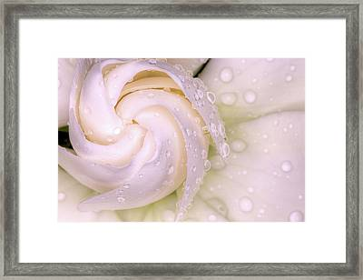 Spring Showers On The Gardenia Framed Print by JC Findley