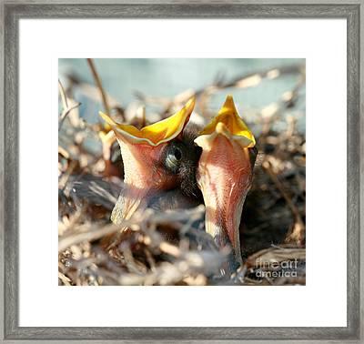 Spring Sing Framed Print