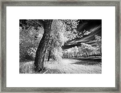 Framed Print featuring the photograph Spring Sky by Dan Jurak
