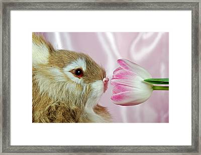Spring Sniffer Framed Print by Maria Dryfhout