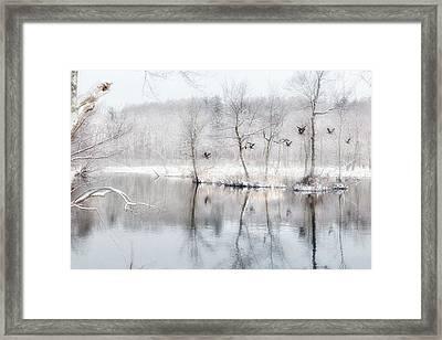 Spring Snow Framed Print by Bill Wakeley