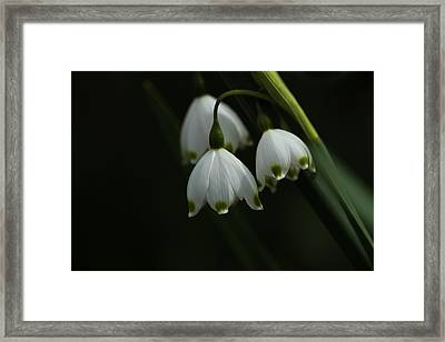 Spring Snowflakes  Framed Print by Connie Handscomb