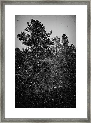 Spring Snowstorm Framed Print by Jason Coward