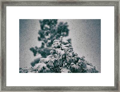 Spring Snowstorm On The Treetops Framed Print by Jason Coward