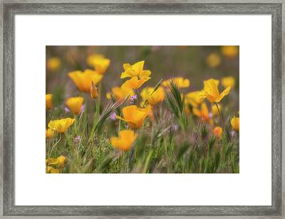 Framed Print featuring the photograph Spring Softly Calling  by Saija Lehtonen