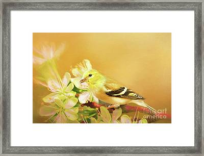 Spring Song Bird Framed Print by Darren Fisher