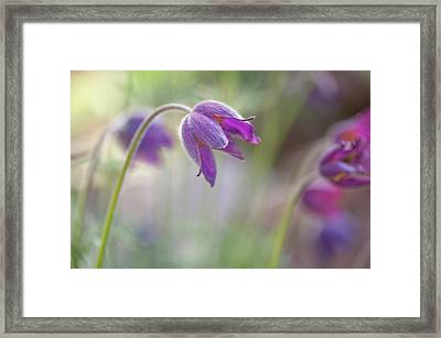 Spring Song Framed Print by Jenny Rainbow