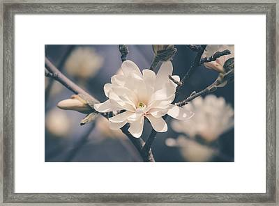 Framed Print featuring the photograph Spring Sonnet by Viviana  Nadowski