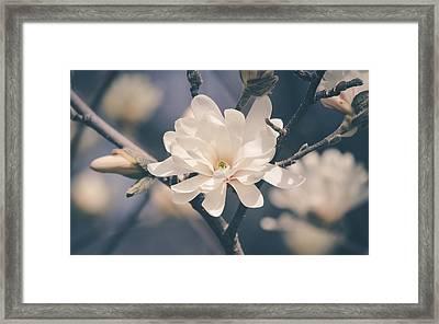Spring Sonnet Framed Print