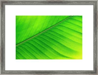 Spring Soprano Framed Print