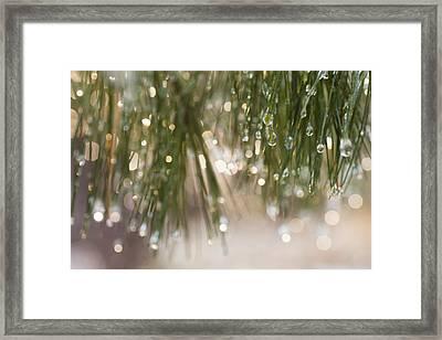 Spring Sparkle Framed Print by Sue OConnor