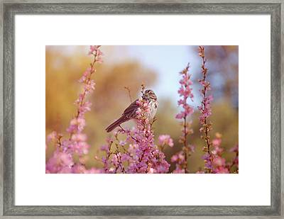 Framed Print featuring the photograph Spring Sparrow by Lynn Bauer