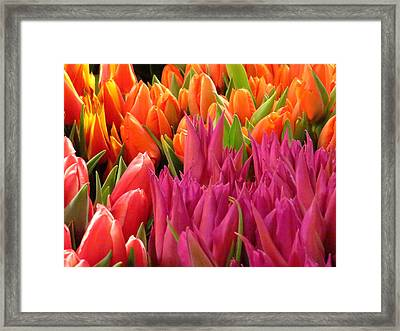 Spring Splash Framed Print by Feva  Fotos