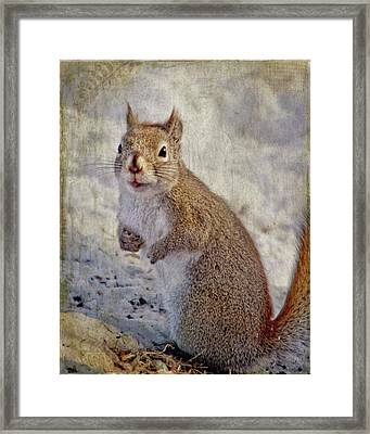 Spring Squirrel Framed Print