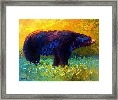 Spring Stroll - Black Bear Framed Print by Marion Rose