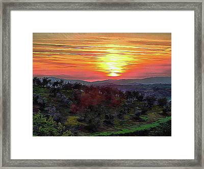 Spring Sunset Over Olive Groves Framed Print