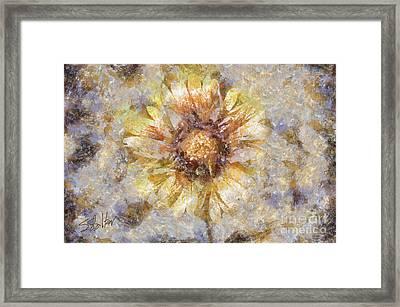 Spring Sunshine Framed Print by Shirley Stalter