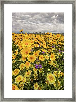 Framed Print featuring the photograph Spring Super Bloom by Peter Tellone