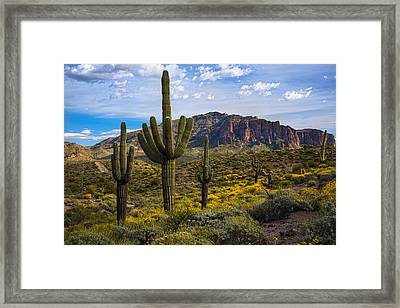 Spring Time At The Superstitions Framed Print