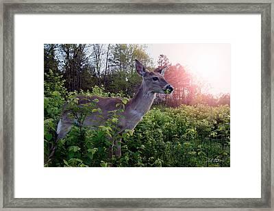 Spring Time Framed Print by Bill Stephens