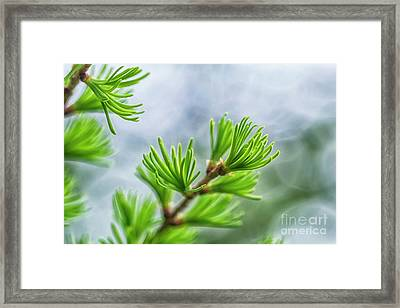 Spring Time II Framed Print