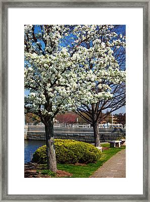 Spring Time In Westport Framed Print by Karol Livote