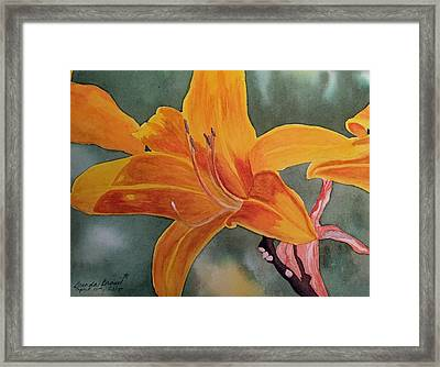 Spring Time Lily Framed Print