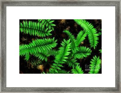 Spring Time Under The Canopy Framed Print