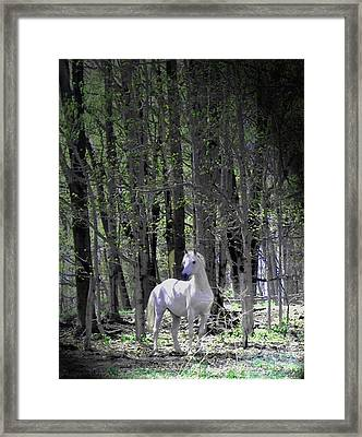 Spring Time With The Stallion Framed Print