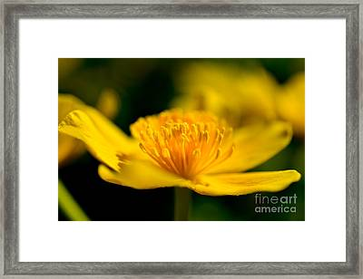 Spring Time Yellow Beauty Framed Print