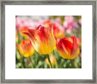 Framed Print featuring the photograph Spring Touches My Soul by Julie Andel