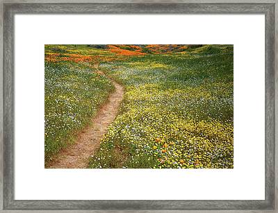Framed Print featuring the photograph Spring Trail Through A Sea Of Wildflowers At Diamond Lake In California by Jetson Nguyen