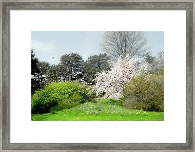 Framed Print featuring the photograph Spring Treasures by Diana Angstadt