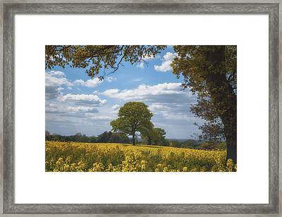 Spring Tree Parade Through The Rapeseed Field Framed Print by Chris Fletcher
