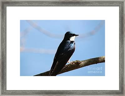 Spring Tree Swallow At Roseland Lake  Framed Print by Neal Eslinger