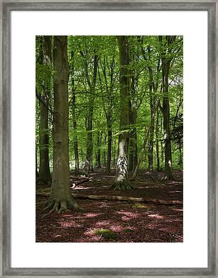 Spring Trees I Framed Print