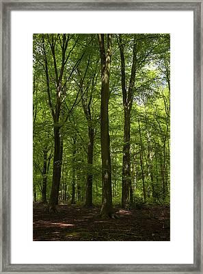 Spring Trees IIi Framed Print