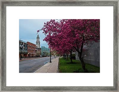 Spring Trees In Boston Fnaueil Hall Framed Print