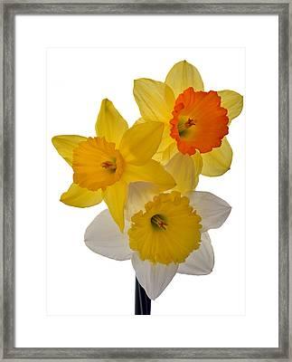 Spring Trio Framed Print by Terence Davis