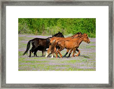 Spring Trot Framed Print by Mike Dawson