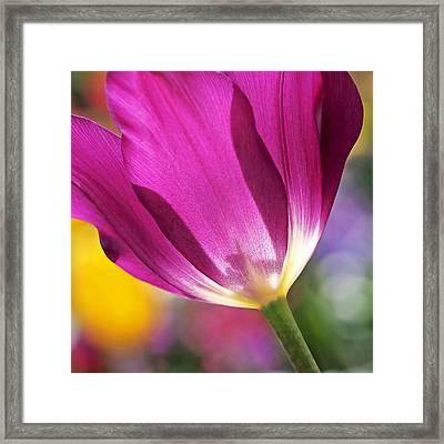Spring Tulip - Square Framed Print by Rona Black