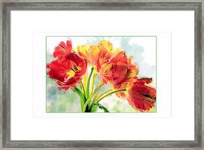 Spring Tulips Framed Print by Margaret Hood