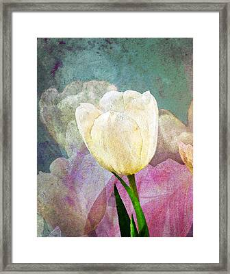 Spring Tulips Framed Print by Moon Stumpp