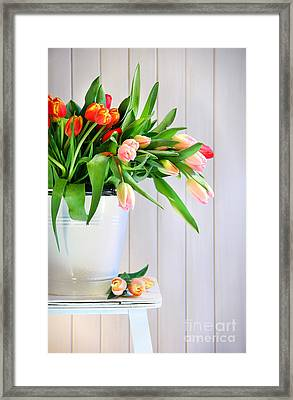Spring Tulips On An Old Bench Framed Print by Sandra Cunningham