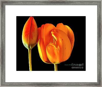 Spring Tulips V Framed Print