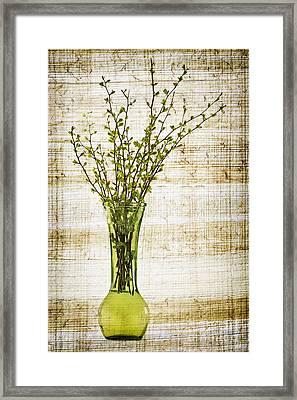 Spring Vase Framed Print by Elena Elisseeva