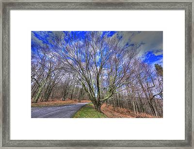 Spring Version Of The Autumn Drive Framed Print by Shannon Louder