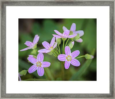 Framed Print featuring the photograph Spring Vibe by Bill Pevlor
