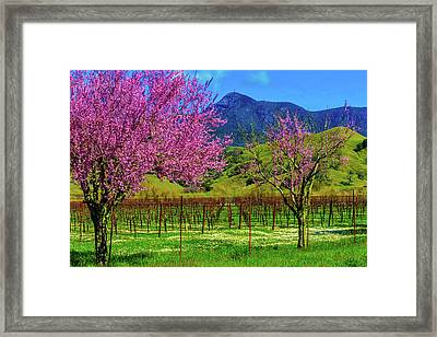 Spring Vineyards And Mt St Helena Framed Print by Garry Gay
